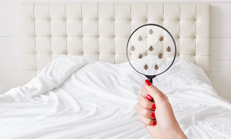 How Does Raid Bed Bug Detectors Work As Traps?