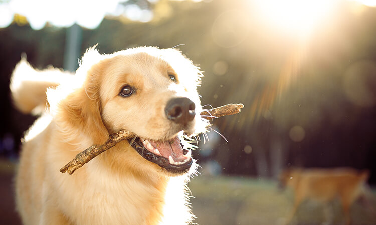 How To Track Pets: A Pet Security Guide