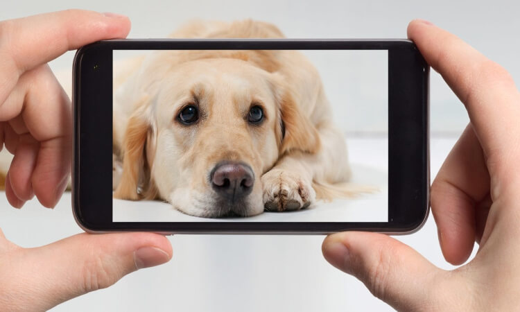 The-7-Best-Cheap-Dog-Cameras