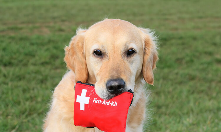 The 7 Best Dog First Aid Kits: Pet Owners' Must-Haves