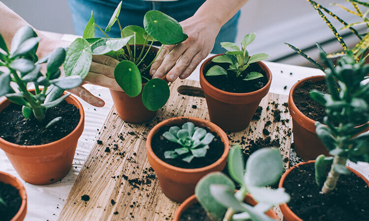 The 7 Best Non Toxic House Plants And Planters
