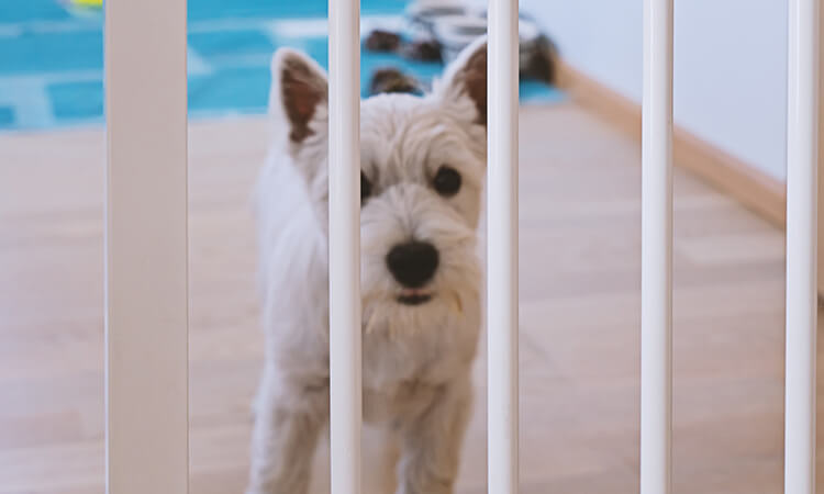 The-7-Best-Pet-Gates-For-Pet-Protection