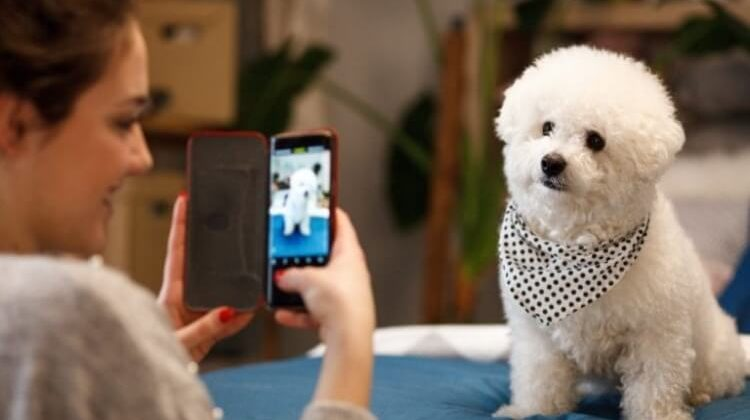 The 7 Best Security Cameras For Dogs